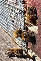 Bees_winter_1-1