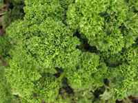 French_parsley