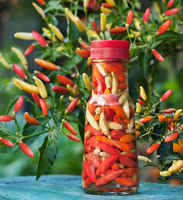 Tabasco-hot-pepper