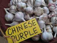Chinese_purple