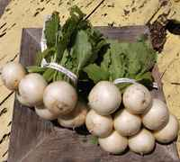 Turnips__white