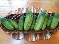 Cucumber_snow's_pickling